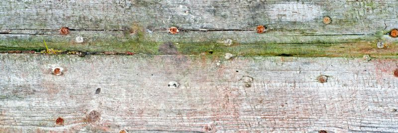 board with dry rot
